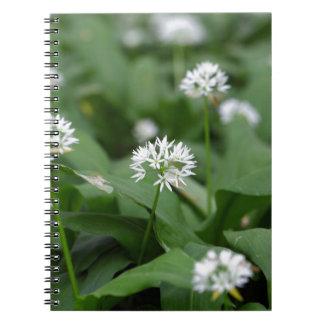 Wild garlic or ramsons Allium ursinum Notebook
