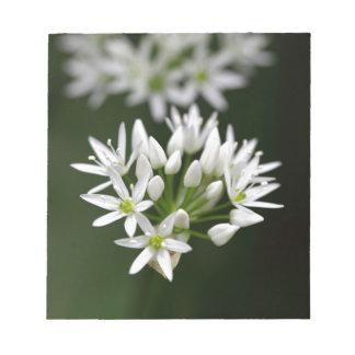 Wild garlic or ramsons Allium ursinum Notepad