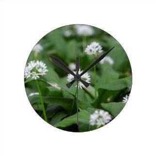 Wild garlic or ramsons Allium ursinum Round Clock