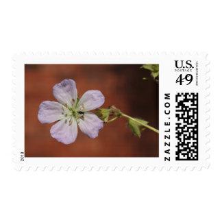 Wild Geranium Postage