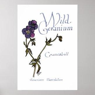 Wild Geranium Poster print