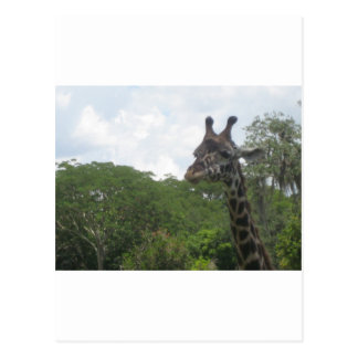 Wild Giraffe Products Postcard