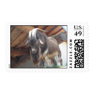 Wild Goat With Big Horns Postage