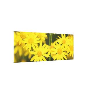 Wild Golden Ragwort Macro Closeup View Stretched Canvas Print