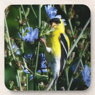 Wild Goldfinch Finch Bird Wildlife Animal Flowers Coaster