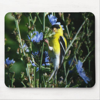 Wild Goldfinch Finch Bird Wildlife Animal Flowers Mouse Pad