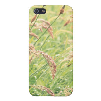 Wild gramineous covers for iPhone 5