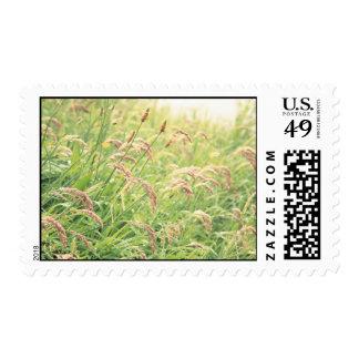 Wild gramineous postage stamp