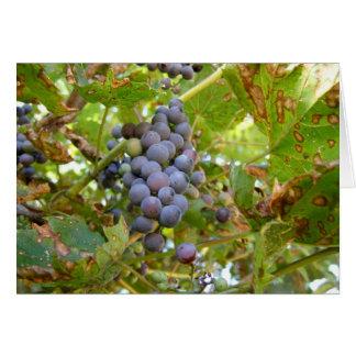 Wild Grapes Card
