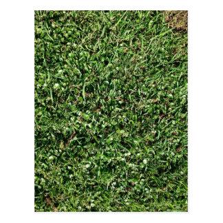 Wild grass and clover texture postcard