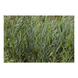 Wild Grass Print