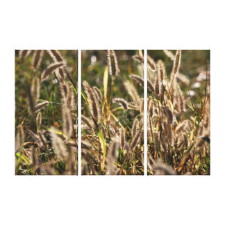 Wild Grass Seed Heads Wrapped Canvas Panels
