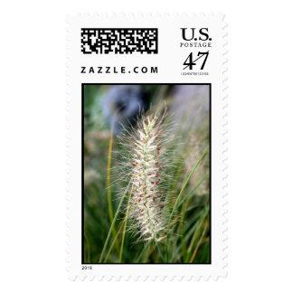 Wild Grass Seeds Customized Stamp