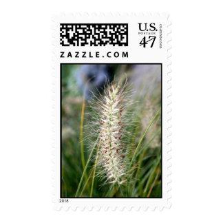 Wild Grass Seeds Stamp