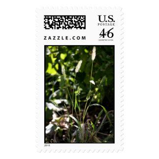 Wild Grass Stamp