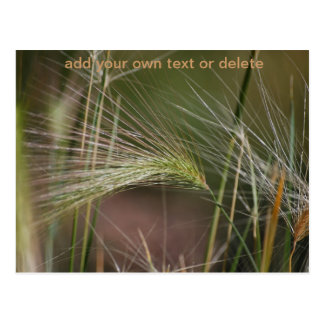 Wild Grasses and Weeds in Nature Postcard