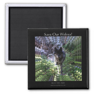 Wild Gray Wolf Save Our Wolves! Magnet