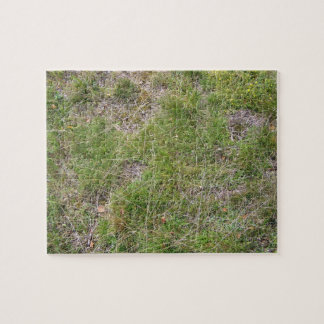 Wild Green Clover Background Puzzles