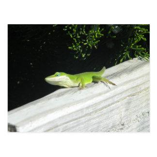 Wild Green Gecko Postcard