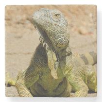 Wild Green iguana Stone Coaster