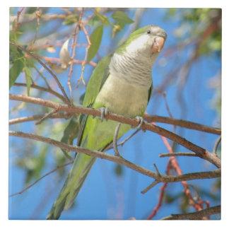 Wild green Quaker Parrot Tile