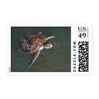"""Wild Green Sea Turtle"" Postage"