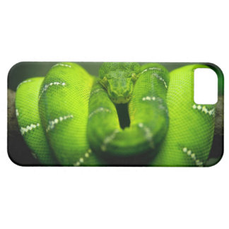 Wild, Green tree snake HD iPhone 5 Cases