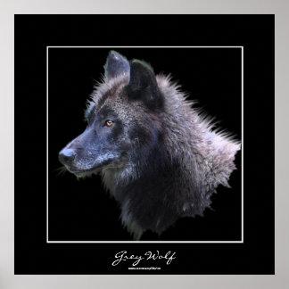 Wild Grey Wolf Wildlife Art Poster