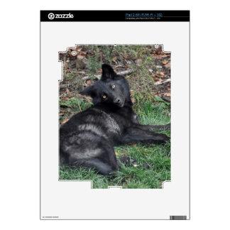 Wild Grey Wolf Wildlife-Supporter Skin Skins For iPad 2