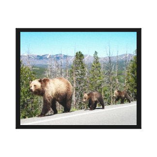 Wild Grizzly Bear Mama and Cubs in Yellowstone Canvas Print