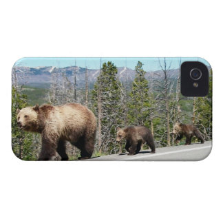 Wild Grizzly Bear Mama and Cubs in Yellowstone iPhone 4 Cover