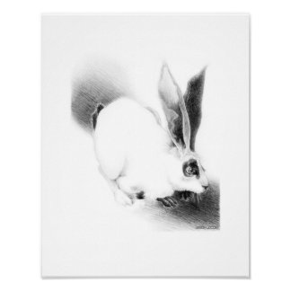 Wild Hare Card Poster