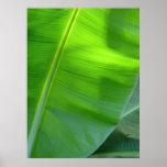 Wild Hawaiian Banana Trees Poster