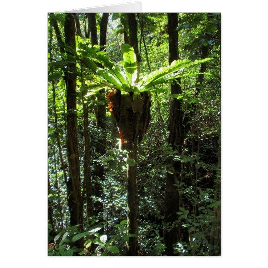 Wild Hawaiian Bird Nest Fern Card