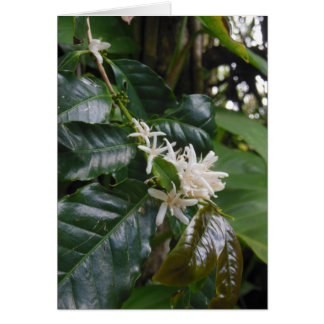 Wild Hawaiian Coffee Blossoms Card