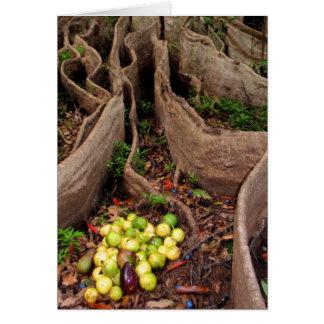 Wild Hawaiian lilikoi avocados Card
