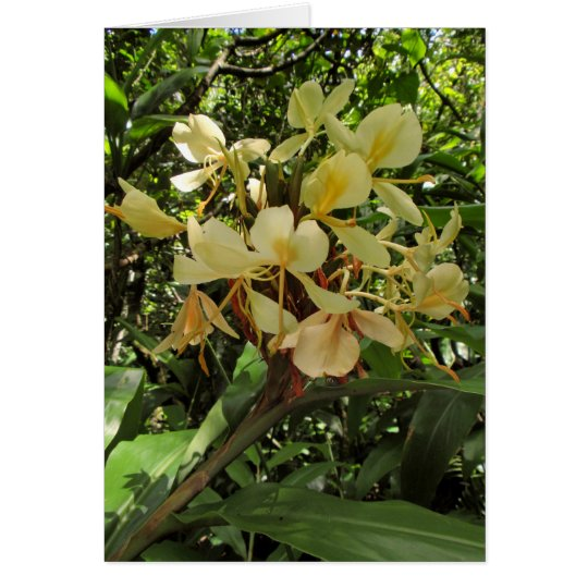 Wild Hawaiian Yellow Ginger Card