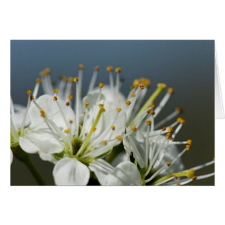 Wild Hawthorn Flower - White Floral Any Occasion C Card