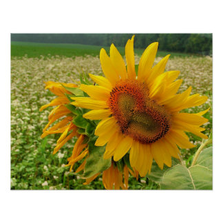 Wild Heart ,Sunflowers,Prints Poster