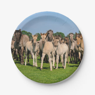 Wild Herd Dulmen Horses with Foals - Funny Party Paper Plate