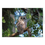 Wild Hoot Owl Staring in Forest Card
