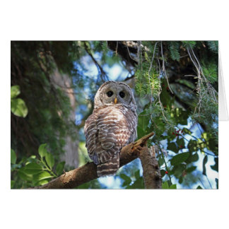 Wild Hoot Owl Staring in Forest Stationery Note Card