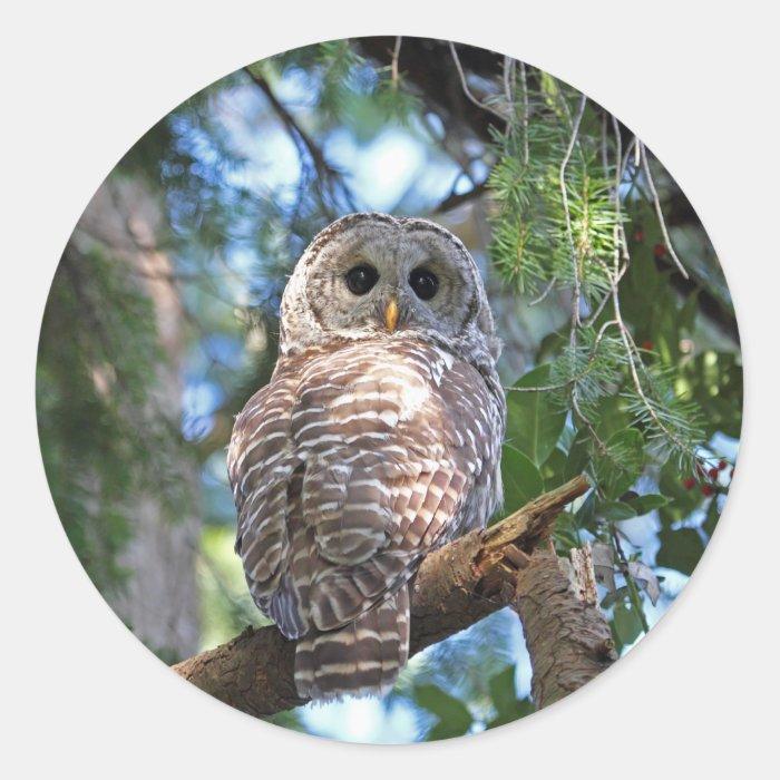 Wild Hoot Owl Staring in Forest Classic Round Sticker