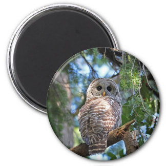 Wild Hoot Owl Staring in Forest Magnet