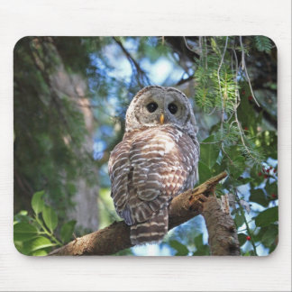 Wild Hoot Owl Staring in Forest Mouse Pads