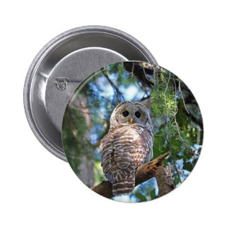 Wild Hoot Owl Staring in Forest Pinback Button