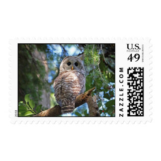 Wild Hoot Owl Staring in Forest Postage Stamp