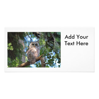Wild Hoot Owl Staring in the Forest Card