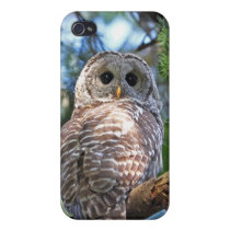 Wild Hoot Owl Staring in the Forest Cover For iPhone 4