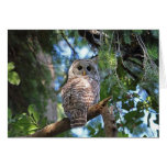Wild Hoot Owl Staring in the Forest Greeting Cards